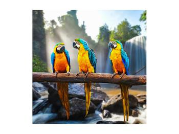 Obraz papoušků (K011994K5050)
