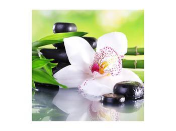 Obraz orchidee (K011995K5050)