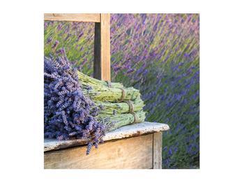 Obraz levandulových svazků (K012032K5050)