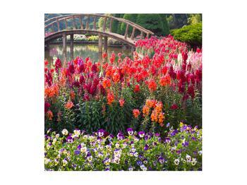 Obraz kvetín (K012048K5050)