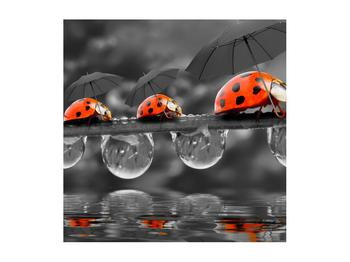 Obraz lienok sedembodkových s dáždnikmi (K012059K5050)