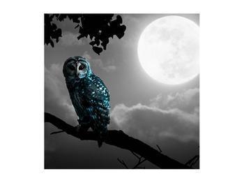 Tablou cu bufnița nocturnă (K012185K5050)