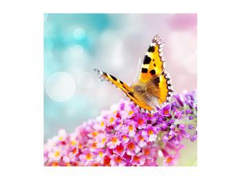 Obraz motýla na květech (K012351K5050)