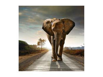 Tablou cu elefant (K012479K5050)