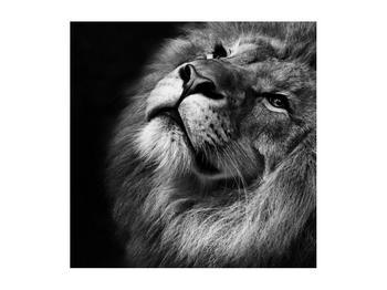 Černobílý obraz lva (K012767K5050)