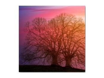 Obraz stromov v hmle (V020088V5050)