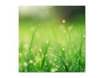 Obraz - rosa na tráve (V020169V5050)