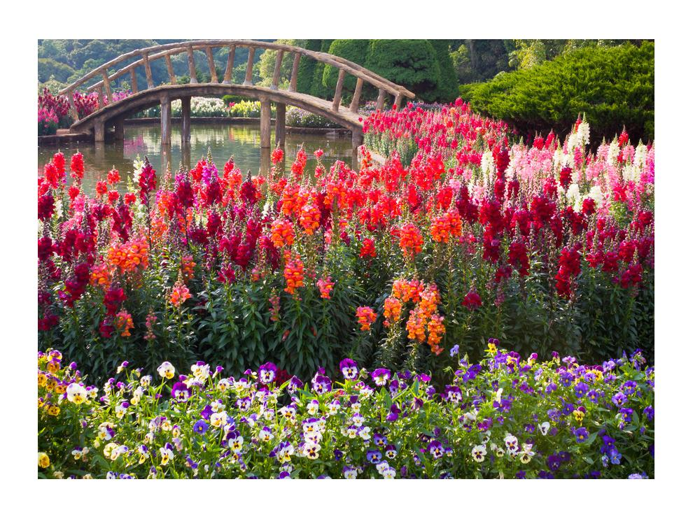 Obraz kvetín (K012048K7050)