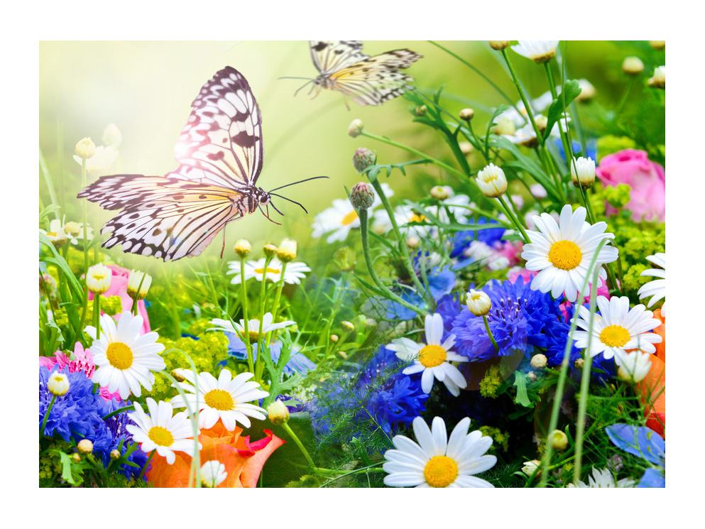 Slika poletnih cvetov z metuljem (K012220K7050)