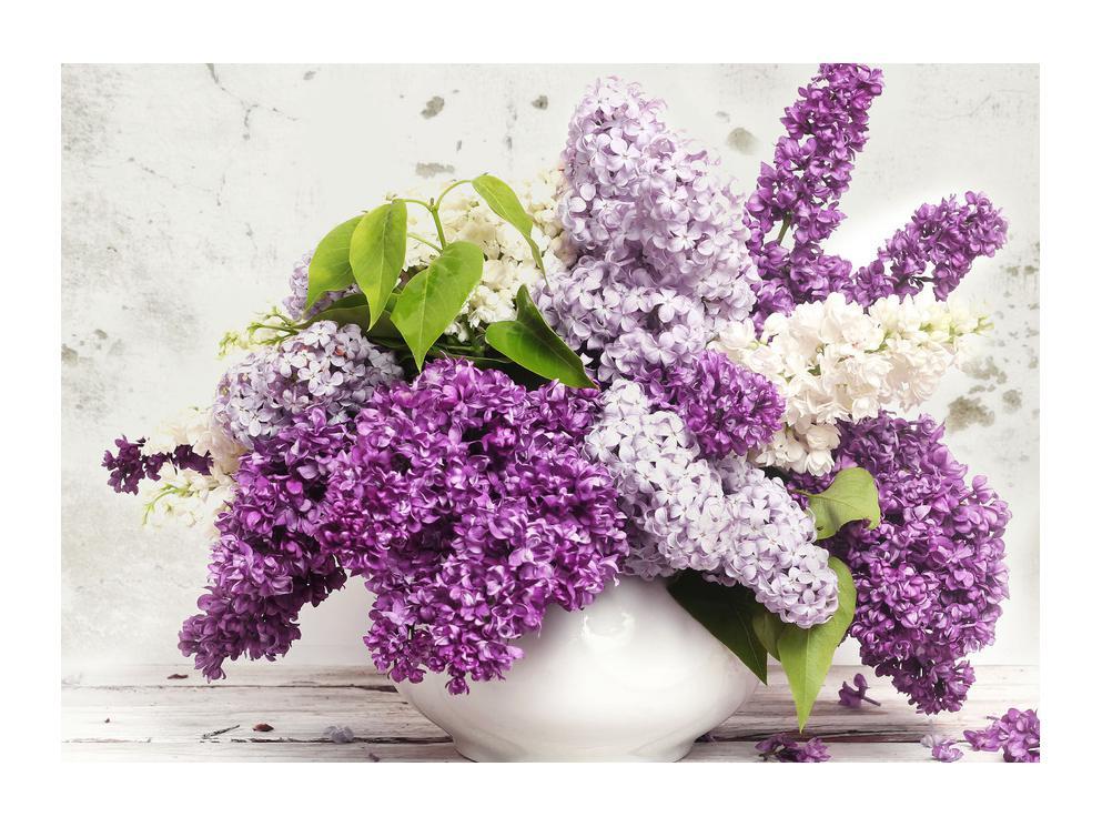 Slika mirisnih jorgovana (K012224K7050)