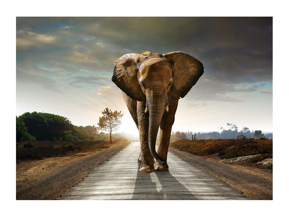 Tablou cu elefant (K012479K7050)