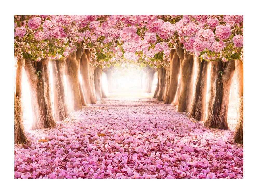 Slika cvjetne staze (K012511K7050)
