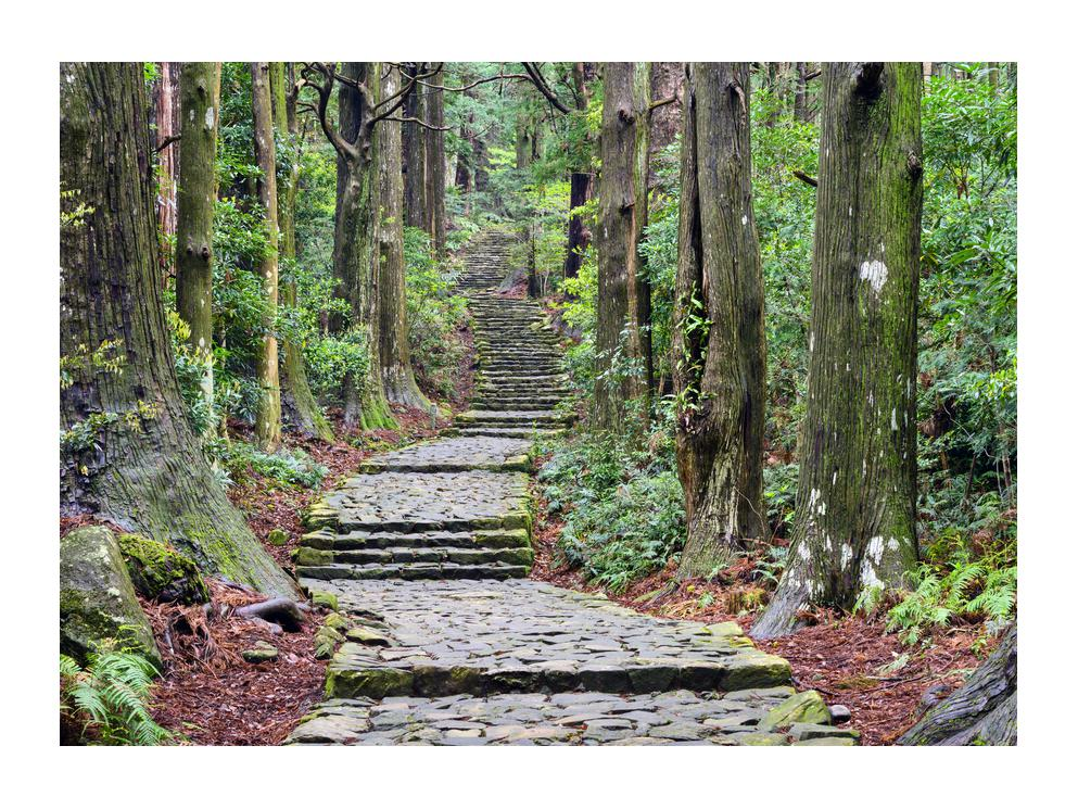 Obraz kamenných schodů v lese (K014268K7050)
