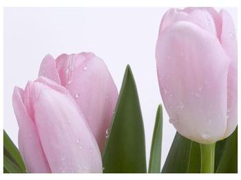 Obraz růžových tulipánů (F000389F7050)