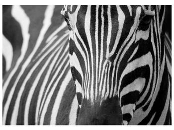 Obraz černobílého detailu zebry (F000715F7050)