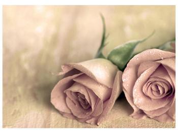 Obraz jemných růží (F001212F7050)
