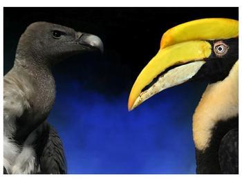 Obraz ptačích zobáku (F001358F7050)