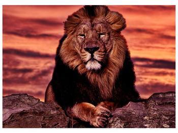 Obraz krále zvířat (F001507F7050)