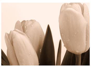 Krásný obraz tulipánů (F001883F7050)