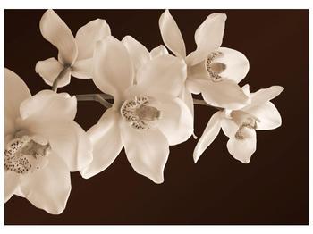 Krásný obraz bílých květin (F001888F7050)