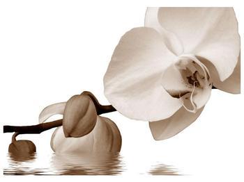 Krásný obraz bílé orchideje (F001900F7050)