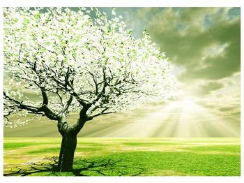 Obraz stromu na jaře (F002291F7050)