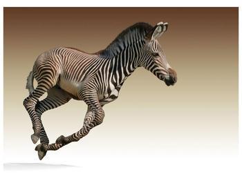 Obraz běžící zebry (F002416F7050)