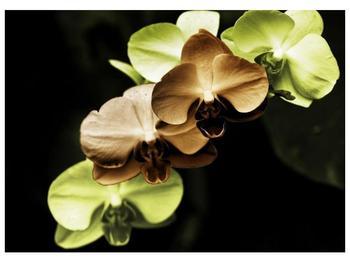 Obraz hnědých a zelených orchideí  (F002723F7050)