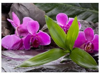 Obraz fialových orchidejí s listím (F004027F7050)