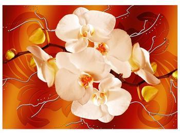 Obraz bílých orchidejí (F005694F7050)