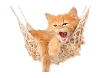 Obraz kočky v síti (K011123K7050)