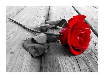 Obraz rudé růže (K011138K7050)