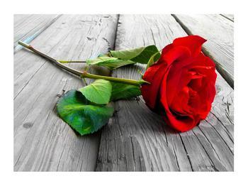 Obraz červené růže (K011140K7050)