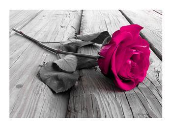 Obraz růžové růže (K011141K7050)
