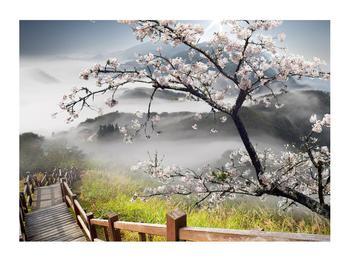 Obraz rozkvetlé jarní krajiny (K011207K7050)