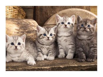 Obraz koťat (K011214K7050)