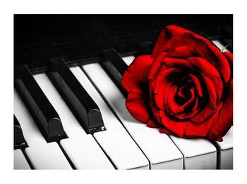 Zongora és egy rózsa képe (K011229K7050)