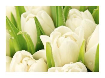 Obraz květů tulipánů (K011254K7050)