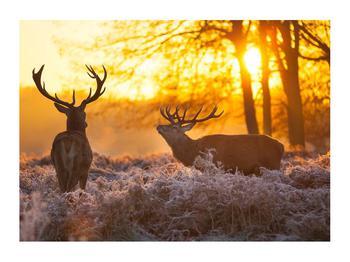 Obraz jelenů (K011267K7050)