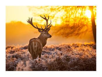 Obraz jelena (K011281K7050)