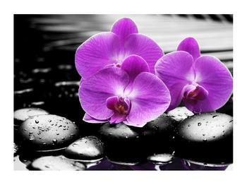 Obraz květů orchideje (K011379K7050)