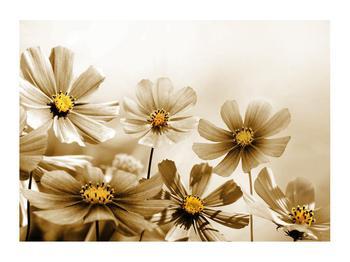 Obraz květů (K011484K7050)