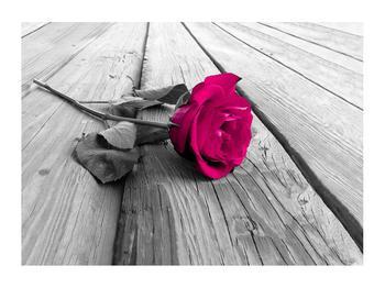 Obraz růže (K011856K7050)