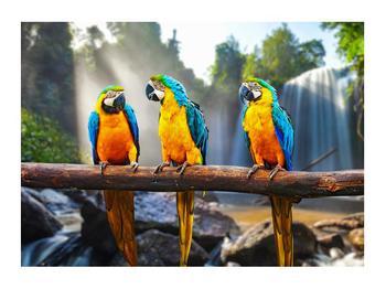 Obraz papoušků (K011994K7050)