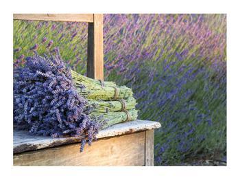 Obraz levandulových svazků (K012032K7050)