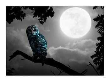 Tablou cu bufnița nocturnă (K012185K7050)