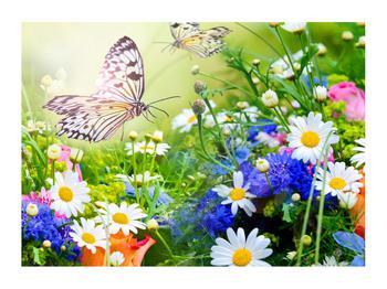 Obraz letních květů s motýlem (K012220K7050)