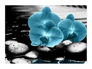 Obraz modrých květů orchideje (K012398K7050)