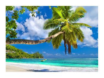 Obraz palmy a pláže (K012669K7050)