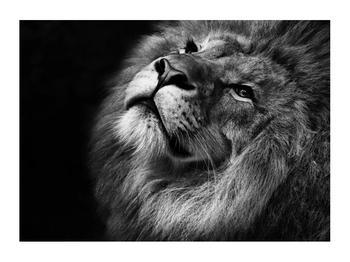 Černobílý obraz lva (K012767K7050)